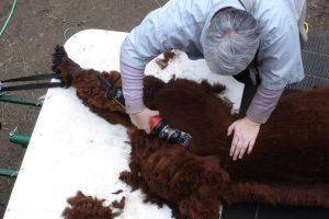 Shearing Service